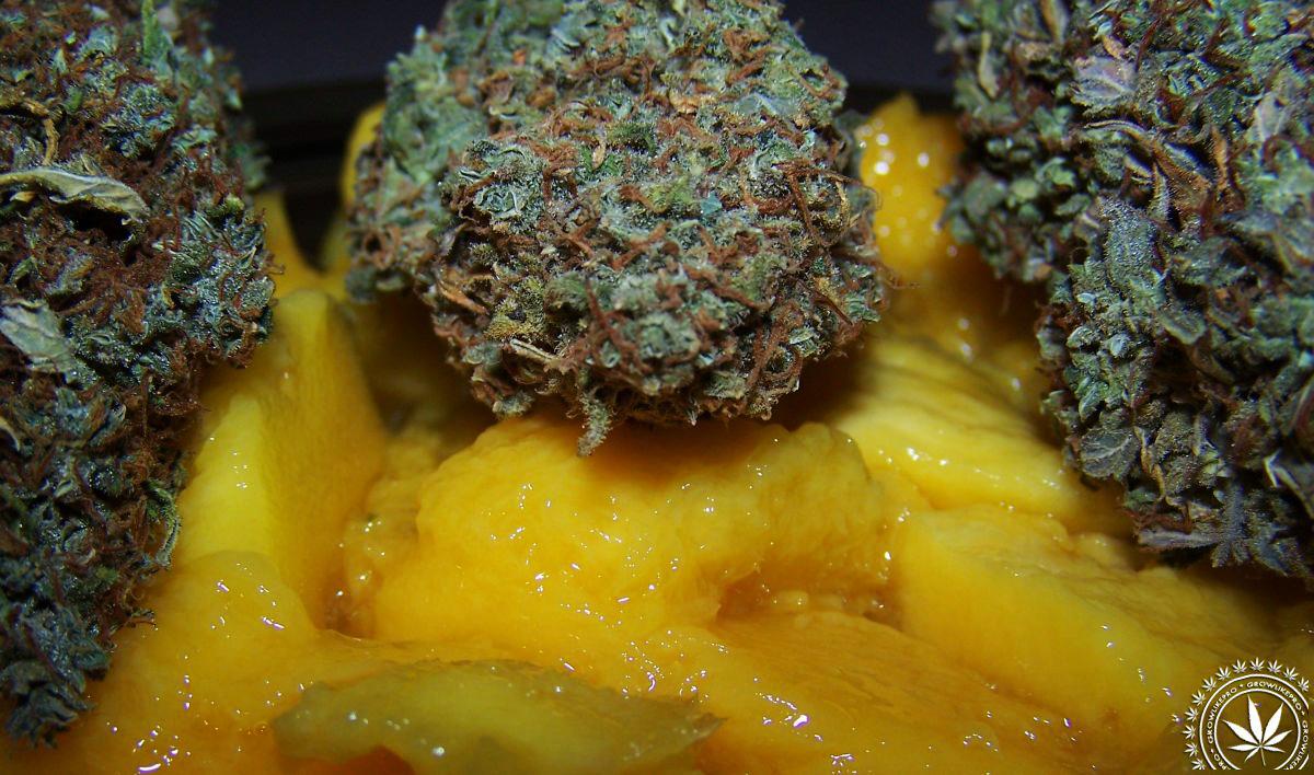 mango wzmacnia haj po zapaleniu trawki!