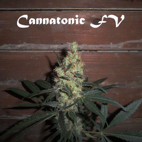 Od wtorku pacjenci legalnie kupią medyczną marihuanę w aptekach!