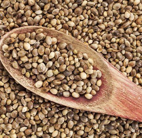 Nasiona konopi rozwiązaniem światowego głodu?
