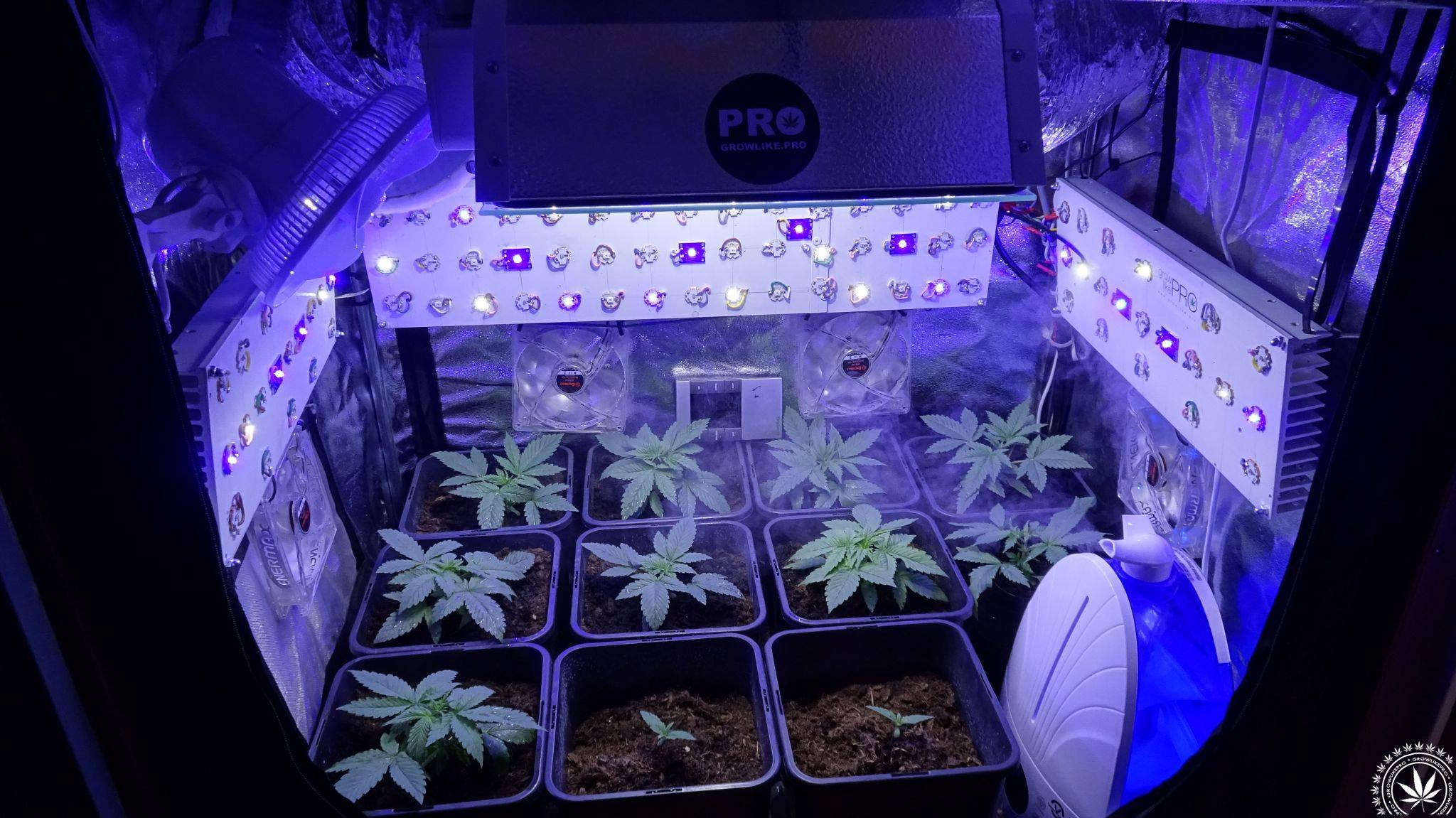 growlike.pro, zwiększanie ilości terpenów w marihuanie