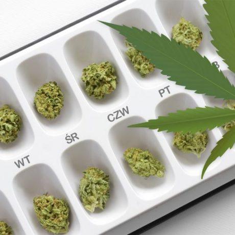 Czy Polska pójdzie śladem Australii w produkcji medycznej marihuany?