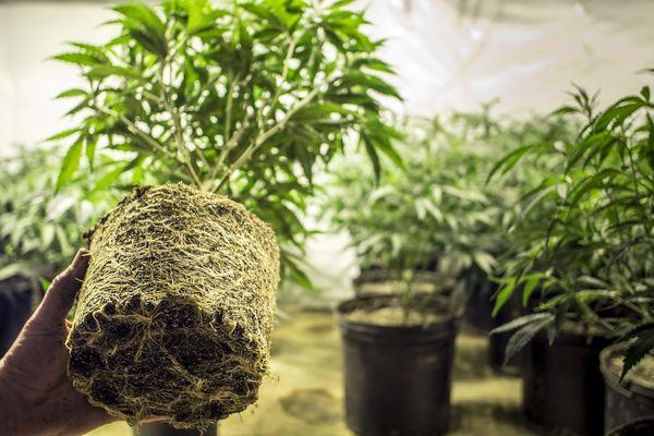 Fundament solidnych roślin - podłoże i dobrze rozwinięte korzenie