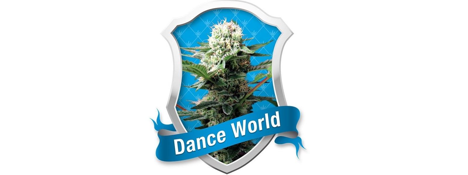 dance world, nasiona marihuany