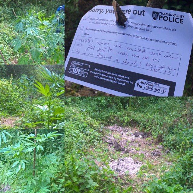 Policja znalazła plantacje i zostawiła zabawną kartkę