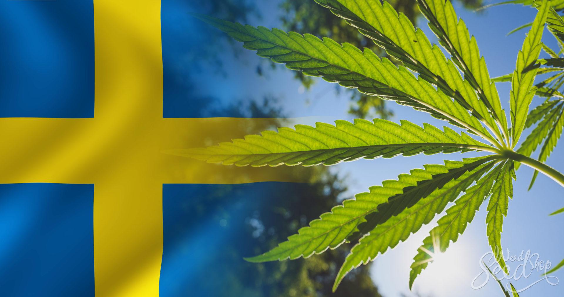 """Szwecja z polityką """"zero tolerancji dla narkotyków"""" notuje rekordowe spożycie marihuany"""