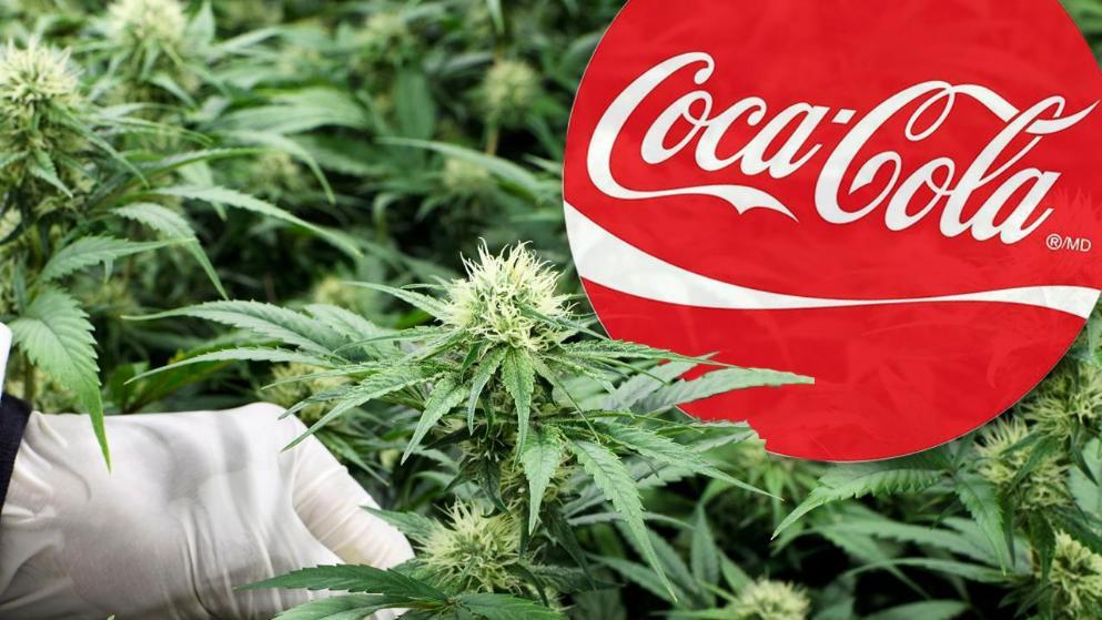 Coca-Cola z CBD? Trwają rozmowy z producentami konopi