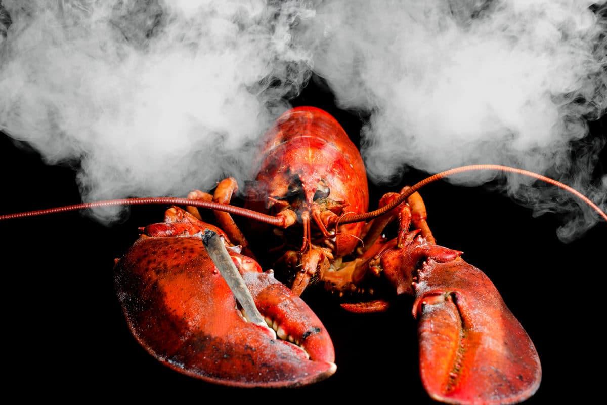 restauracja podaje homarom marihaune