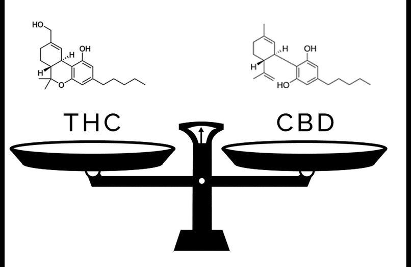 dlaczego cbd i thc to polaczenie idealne