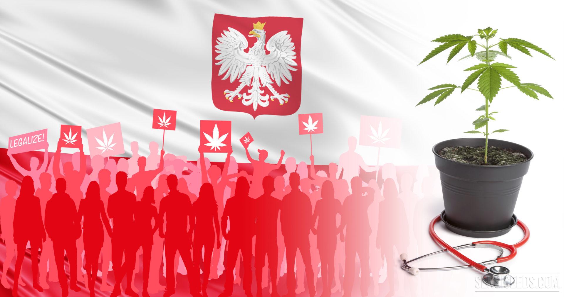 Doczekamy się upraw medycznej marihuany w Polsce