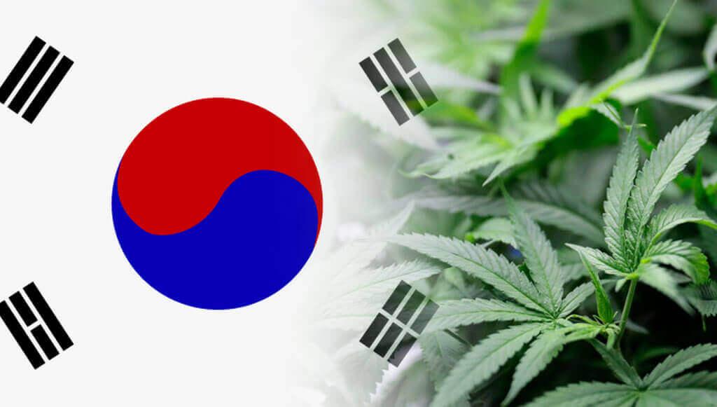 Korea Południowa legalizuje medyczną marihuanę