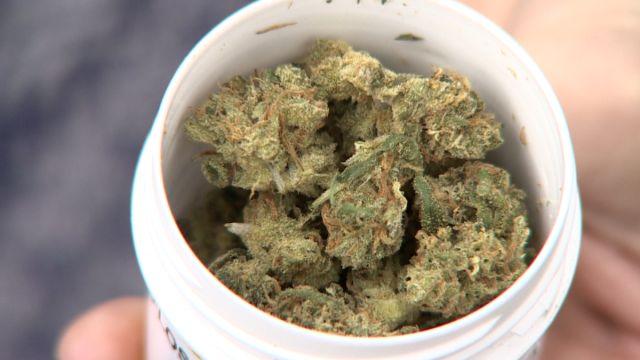 Naczelna Izba Lekarska będzie szkolić lekarzy w zakresie medycznej marihuany