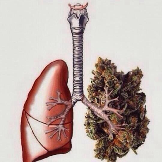 Płuca palaczy marihuany
