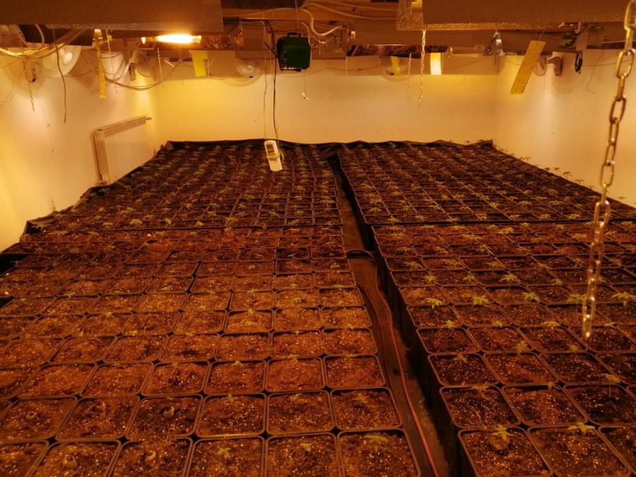 Chińska plantacja marihuany