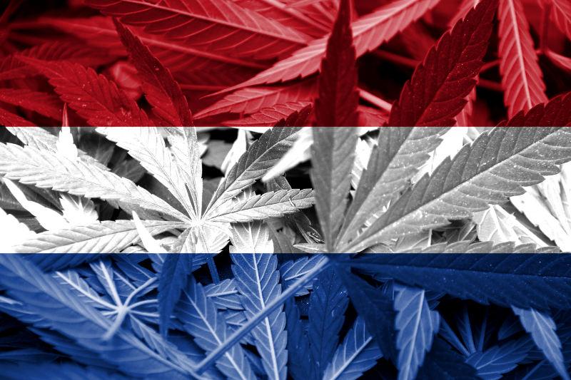Pacjent odliczył koszta uprawy marihuany od podatku