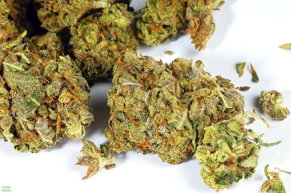 przekupić policjantów marihuaną