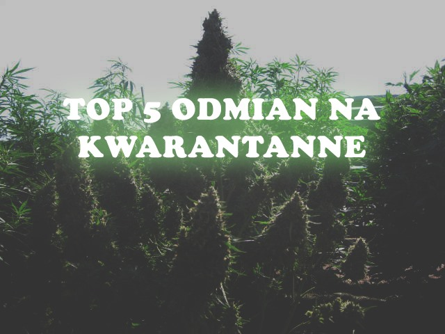 TOP 5 odmian