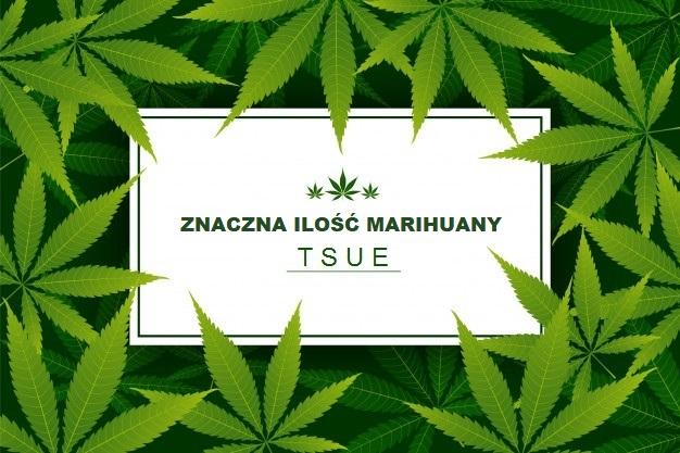 znaczna ilość marihuany