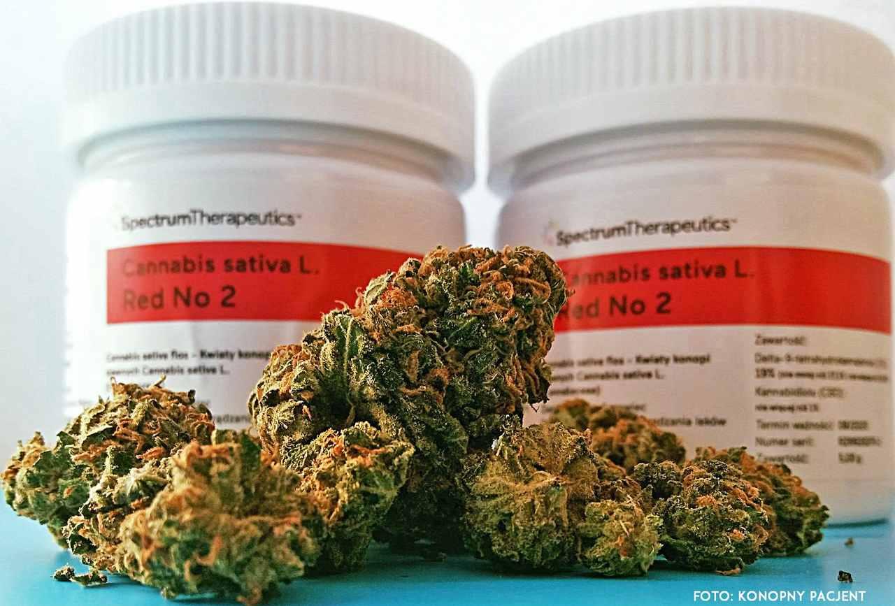 cena medycznej marihuany
