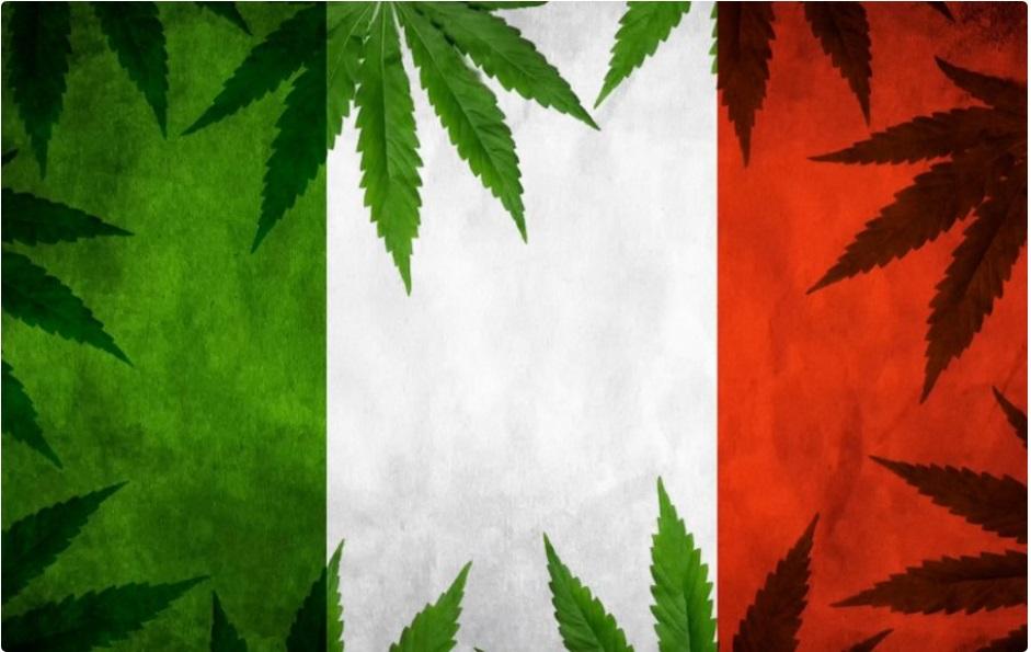 Włochy dekryminalizują uprawę konopi