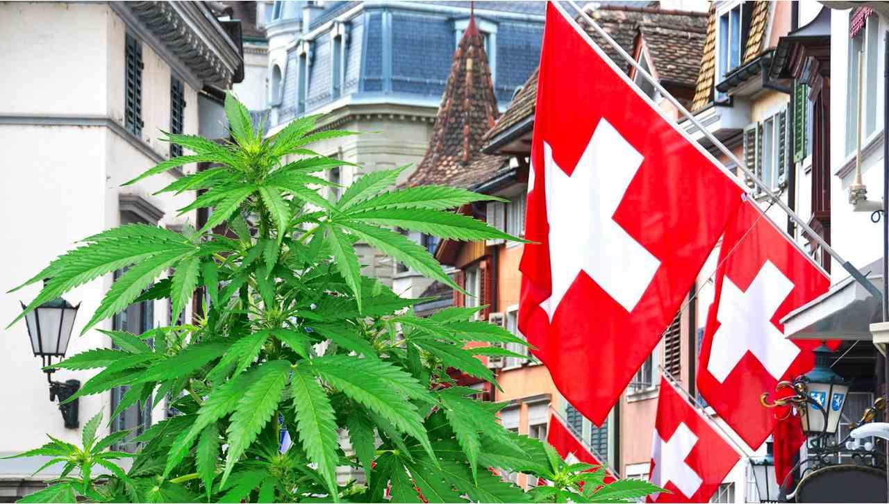 legalny obrót marihuaną